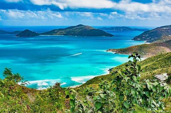 Tórtola en las Islas Vírgenes
