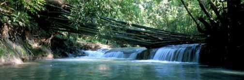 Cataratas Mayfield Jamaica