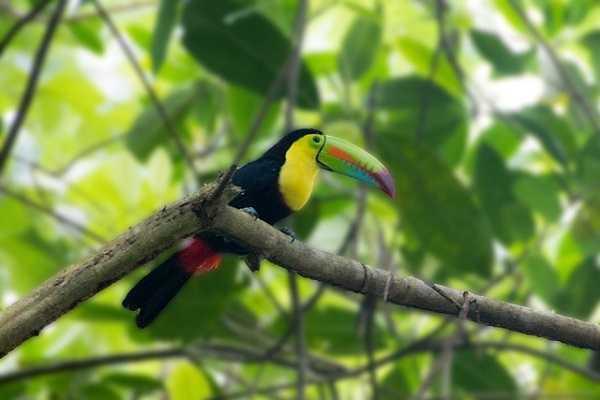 Fauna en Panamá