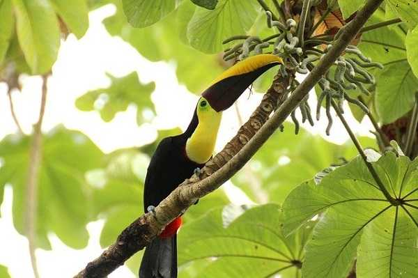 Parque Manuel Antonio en Costa Rica